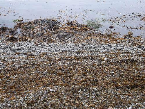 seawead.jpg